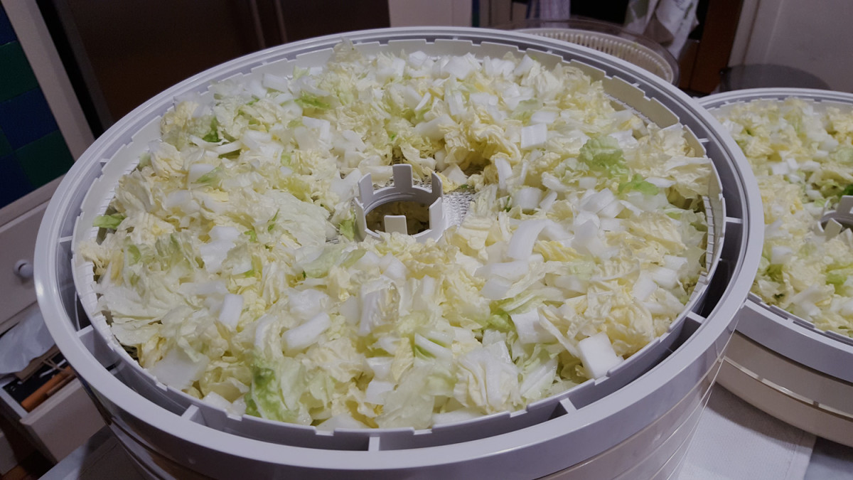 Diced cabbage ready for drying.