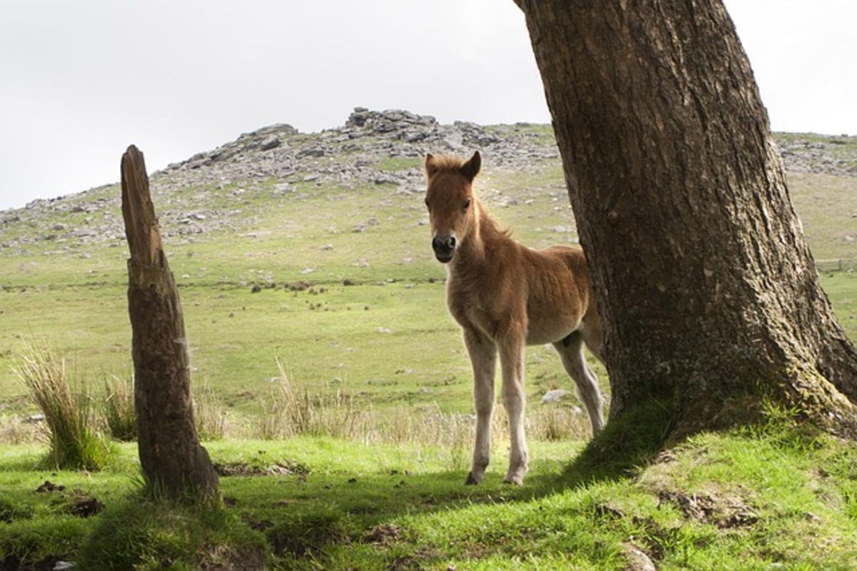 Peekaboo pony