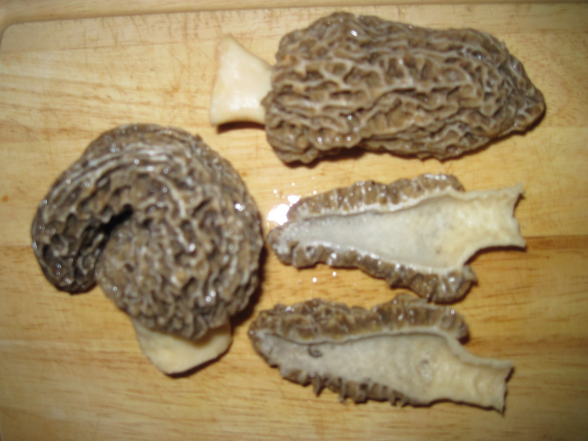 the-elusive-morel-local-gold