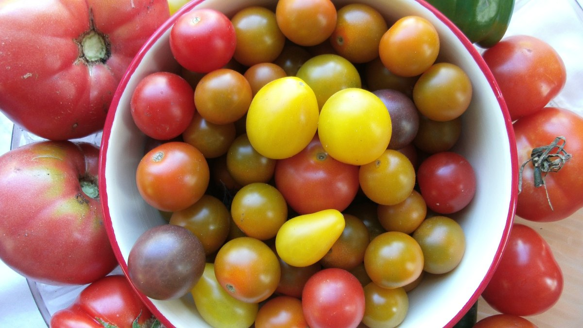 A variety of fresh tomatoes.