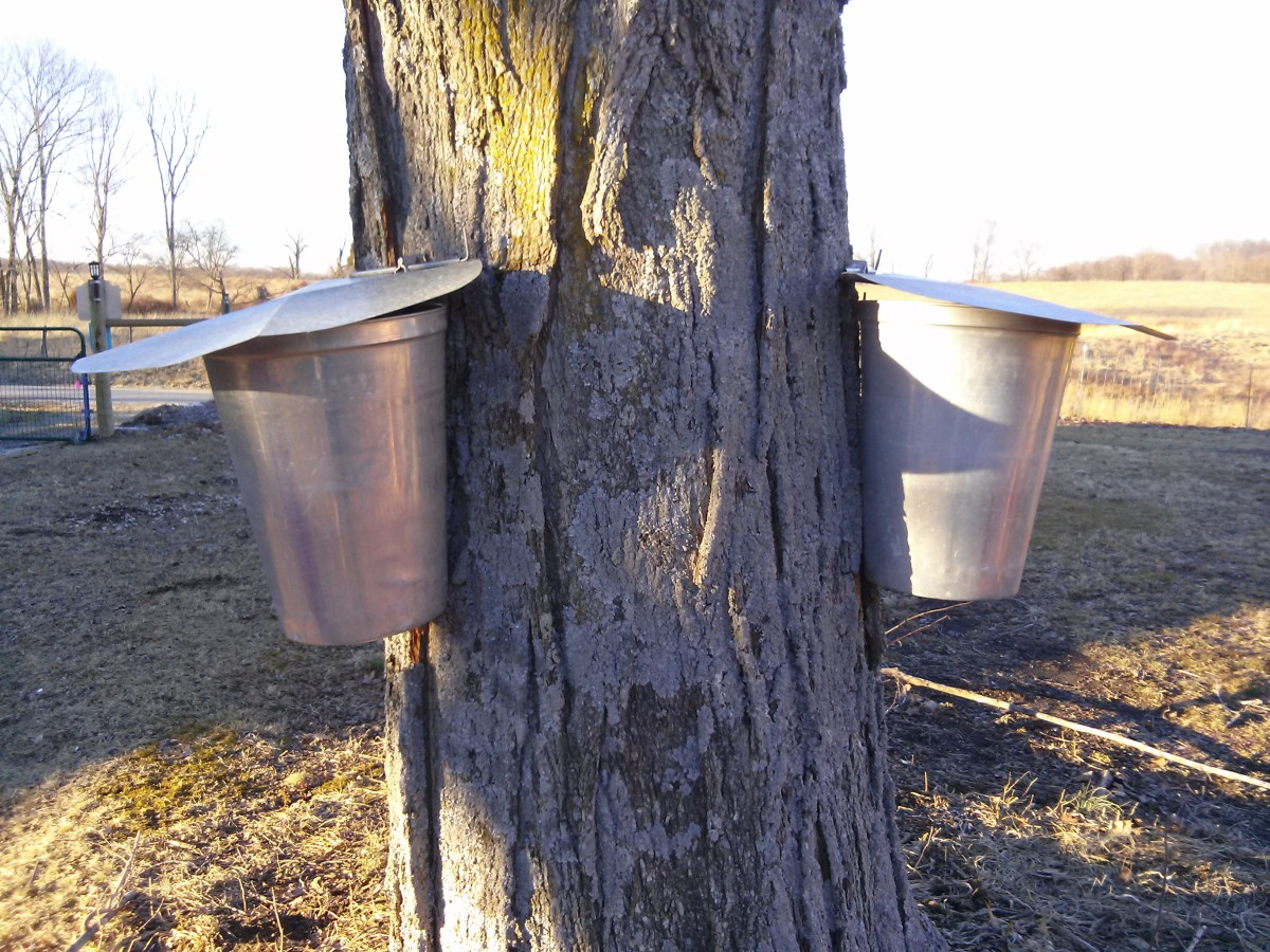 I love the look of metal buckets hanging on a tree.