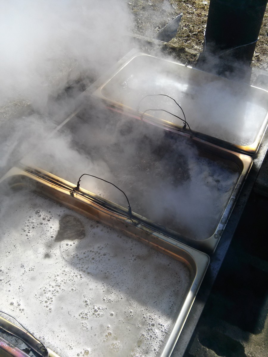 The sap is boiling and evaporating nicely.