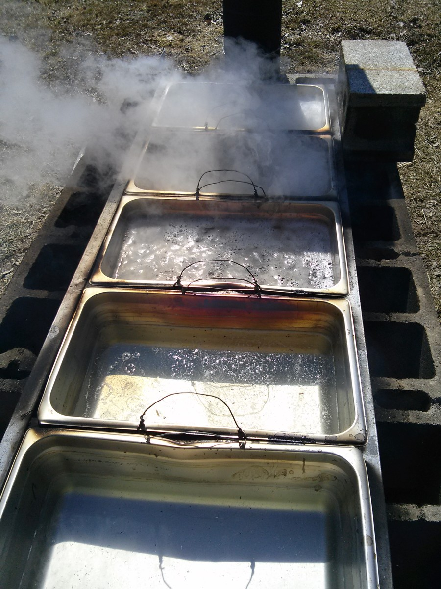 The sap is starting to boil.