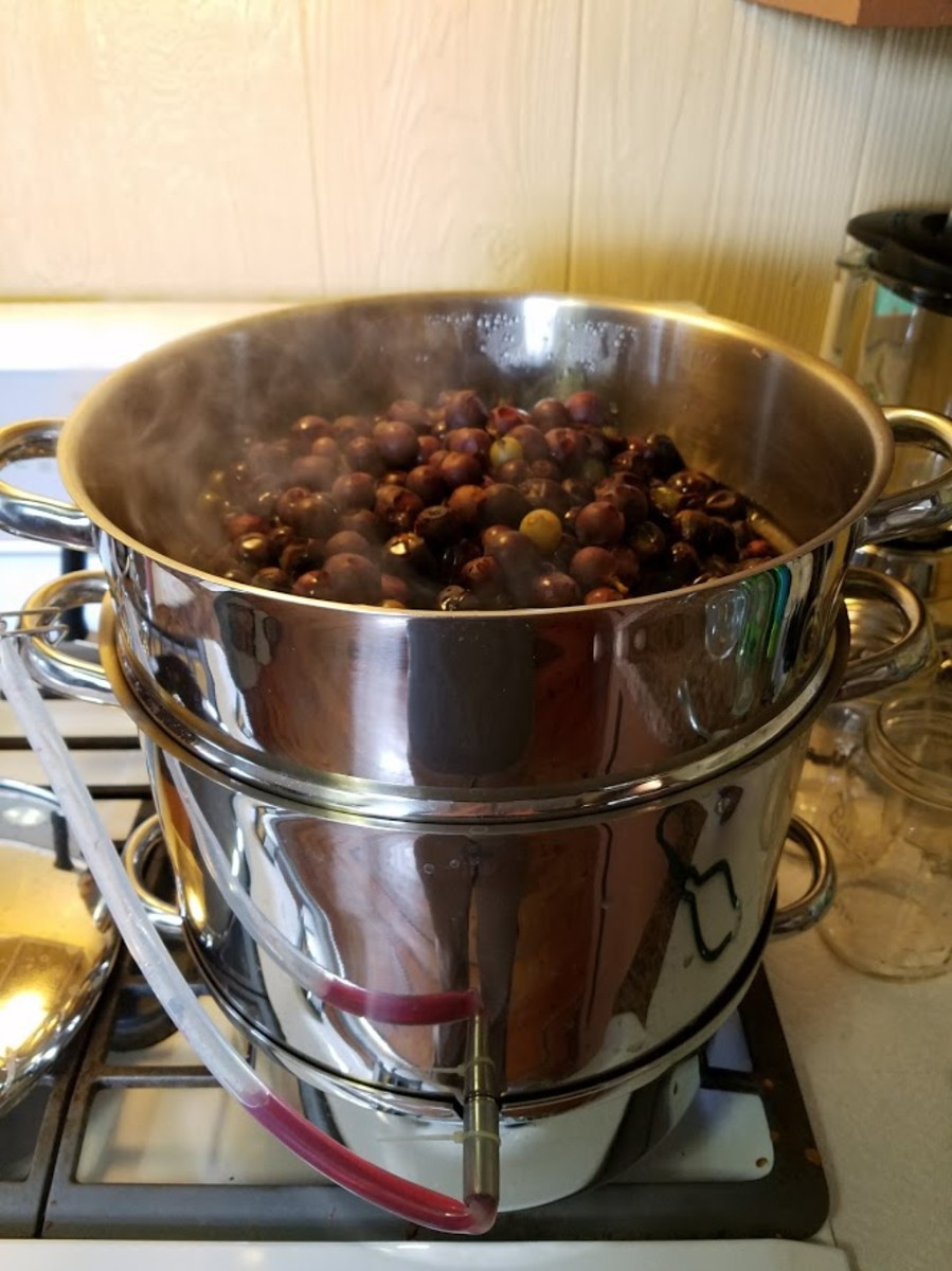 Grapes in the top pan are starting to release their juice.