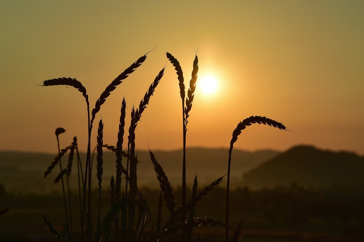 Silhouetted grains.