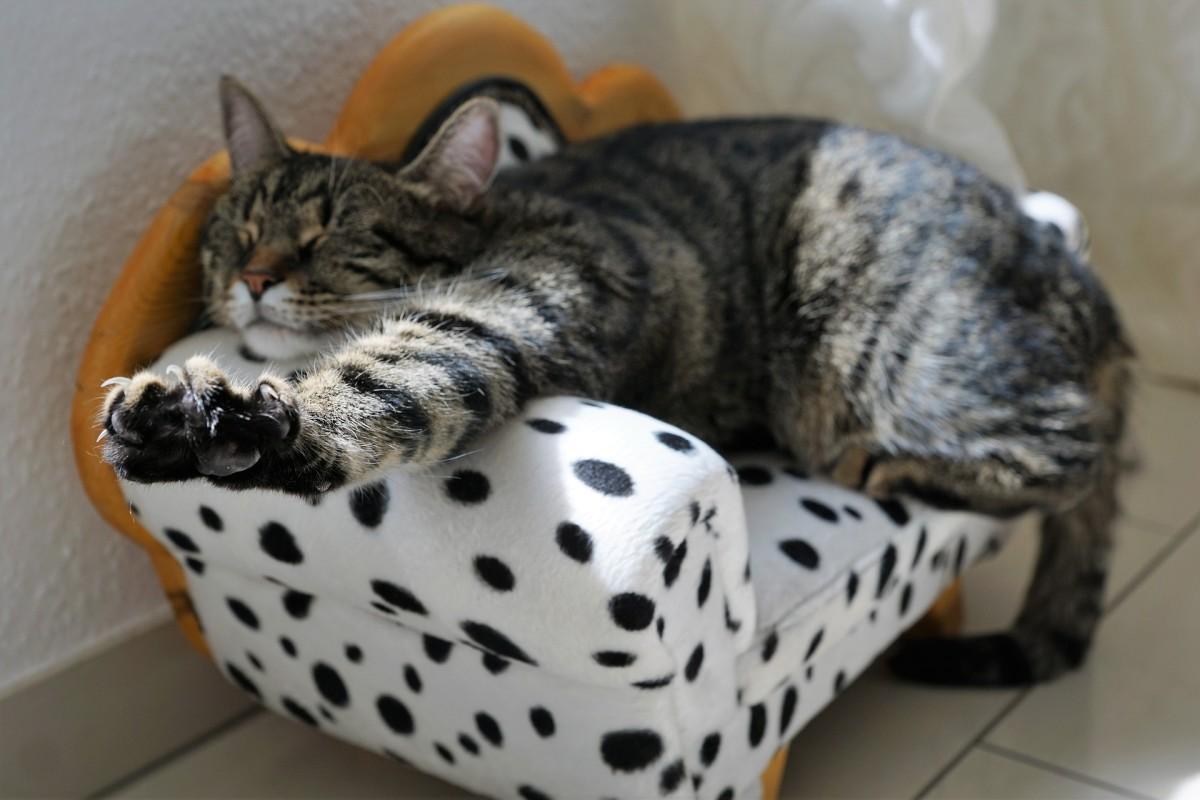 Stress-free cat.