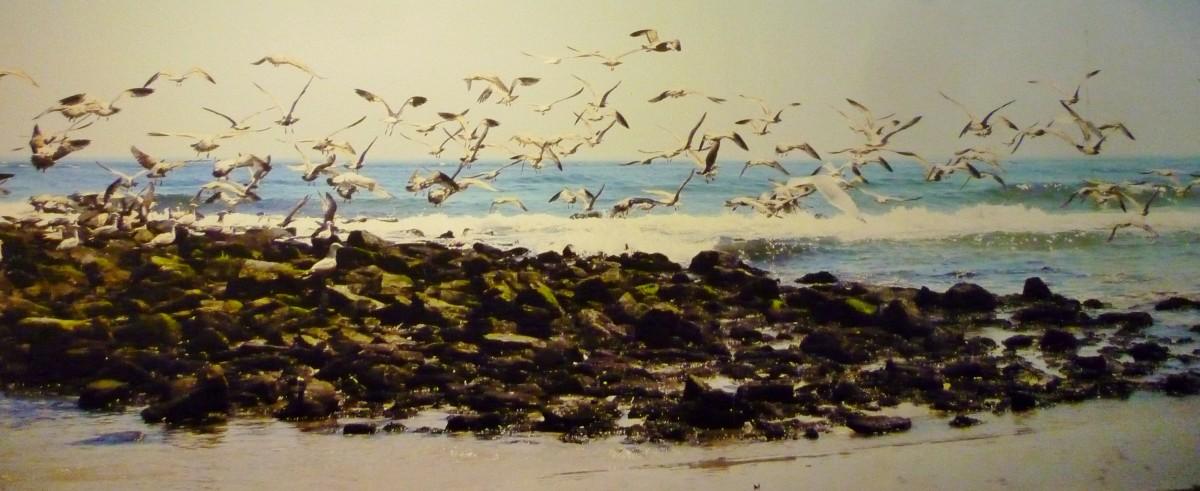 Seagulls aplenty!