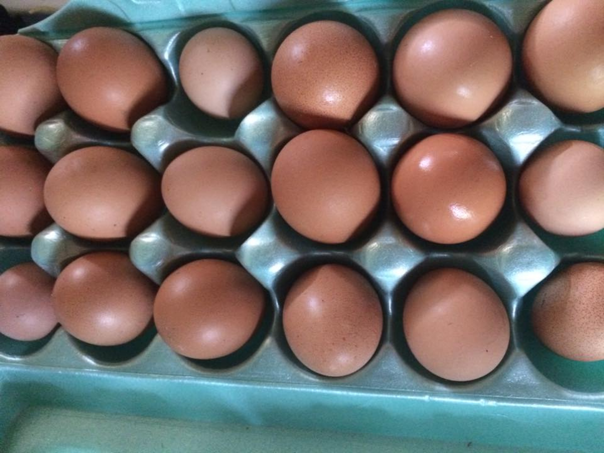 All of my hens seem to lay different sizes of eggs. Large eggs are used for baking.
