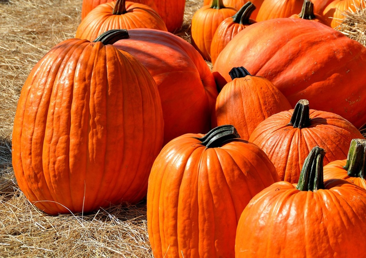 Both fresh and canned pumpkin are packed with Vitamin A, potassium and iron.