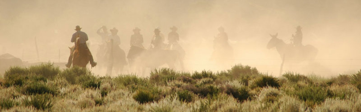 A cattle drive at Deep Springs College