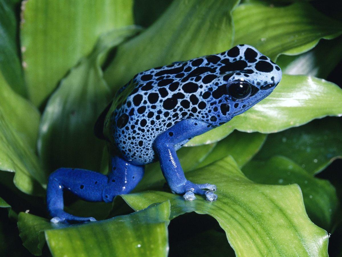 Endangered Animals in the Rainforest | Owlcation