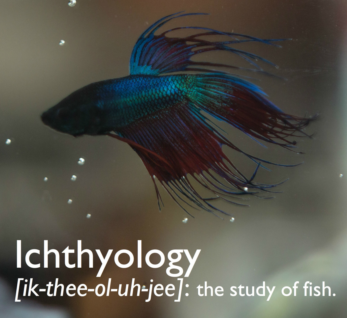 Ichthyology is the study of fish.