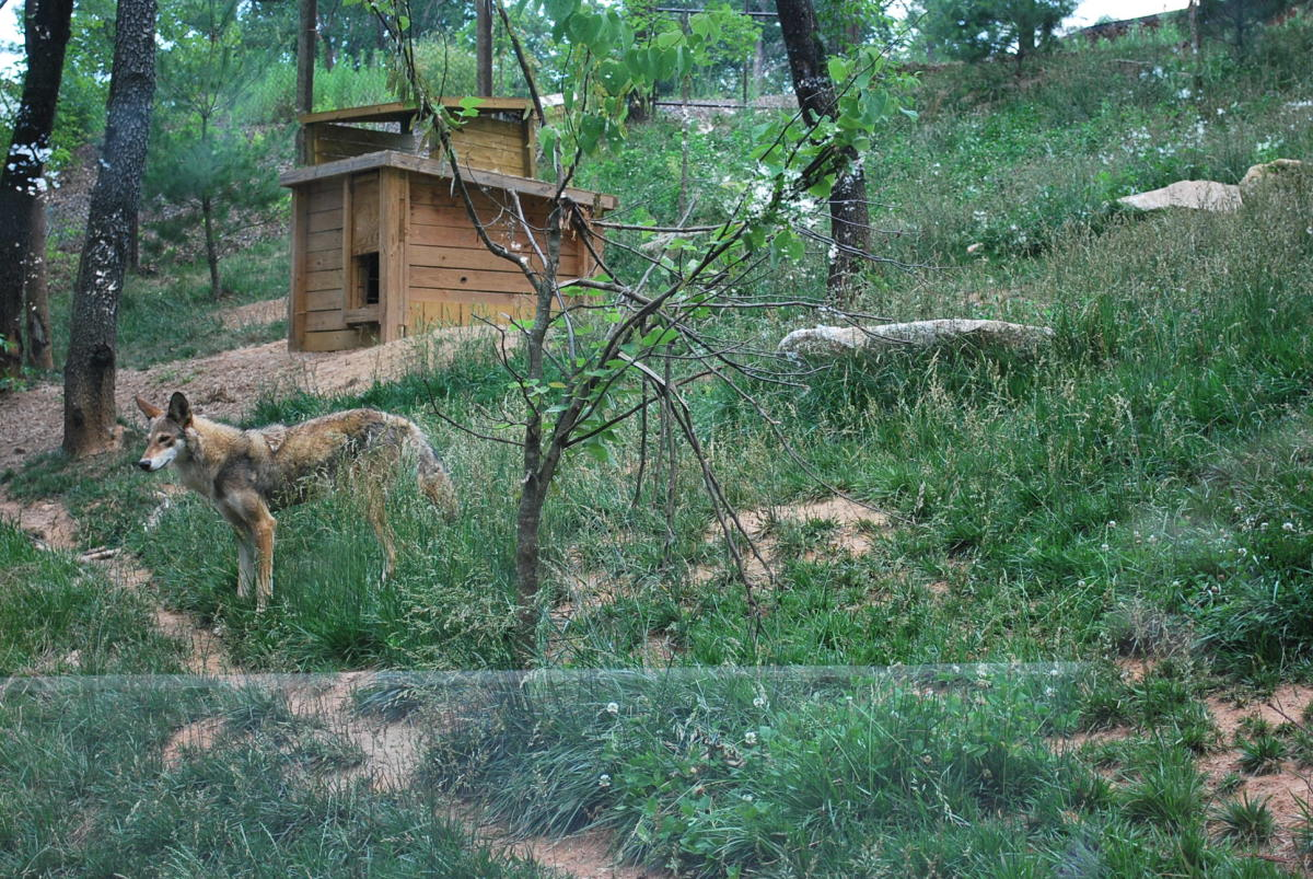 Partial view of the enclosure at the WNC Nature Center