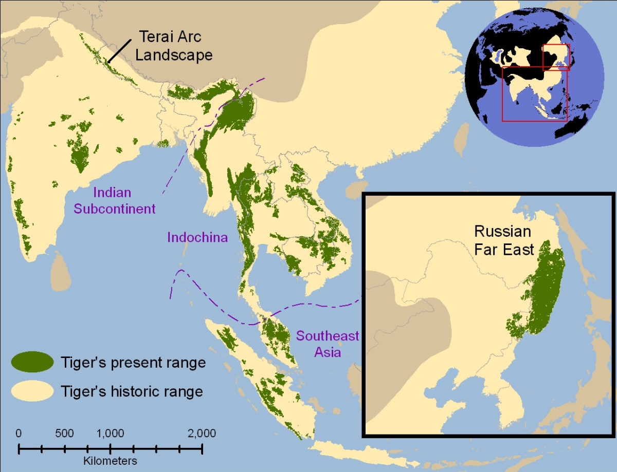 Yellow shows former range of tiger, green areas are where tigers survive today.