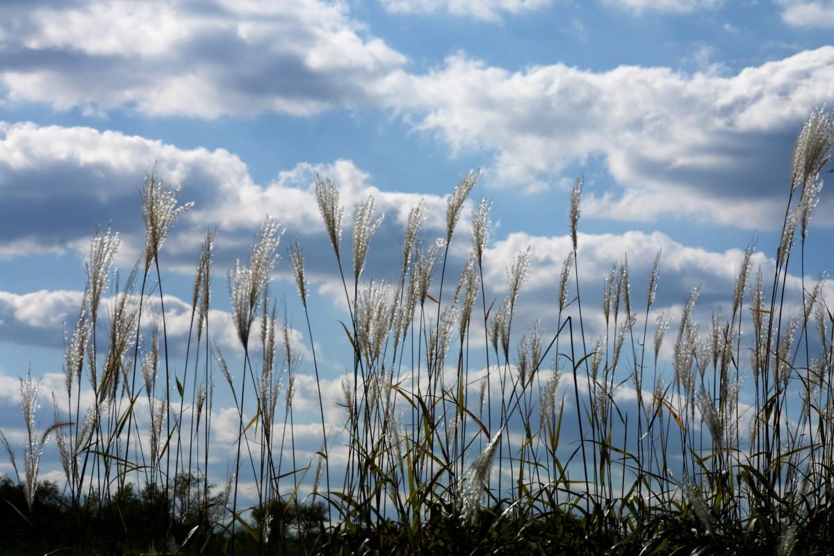 A gentle summer breeze