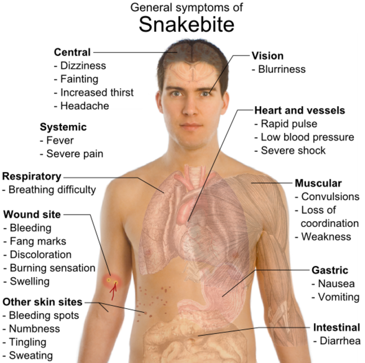 friendly-snakes-vs-not-so-friendly-snakes-identifying-venomous-snakes-in-the-united-states