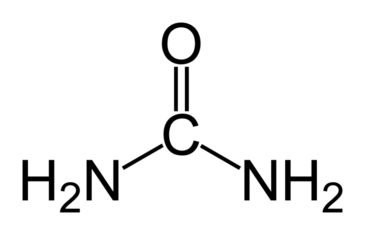 This is a structural diagram of a urea molecule.