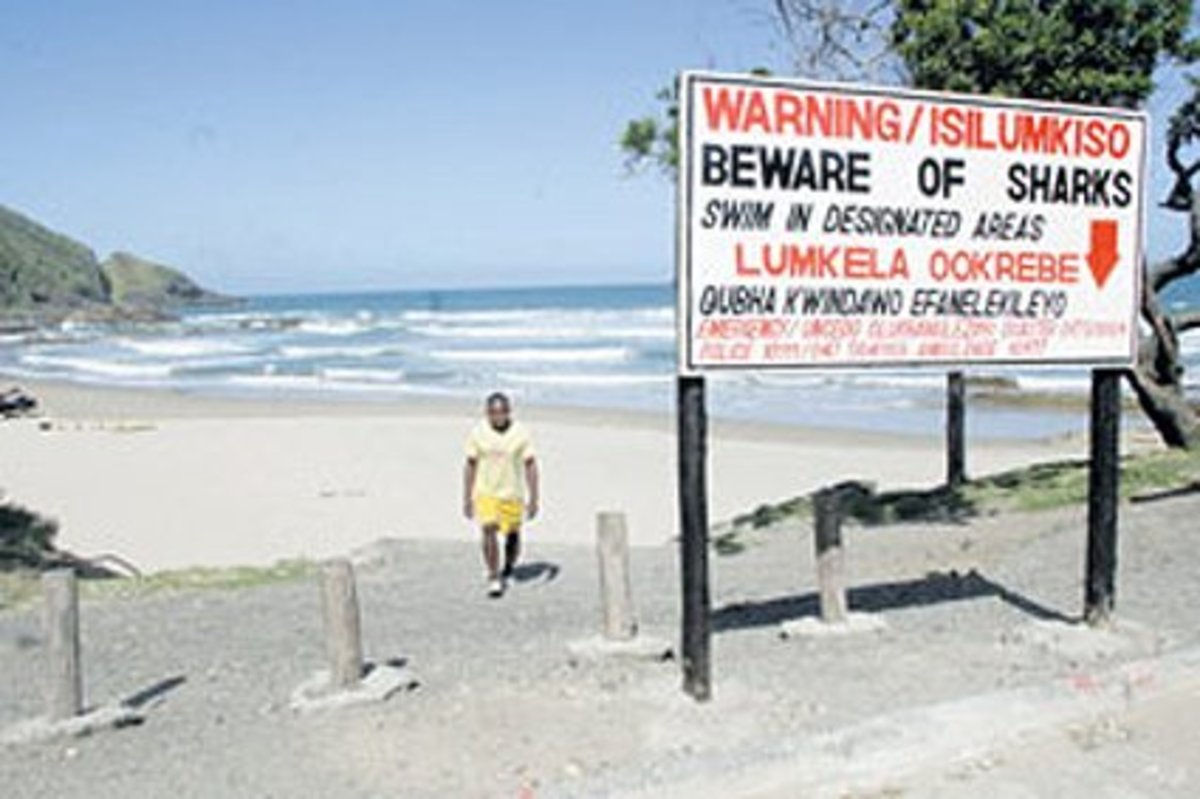 A shark warning sign on the beach at Second Beach.