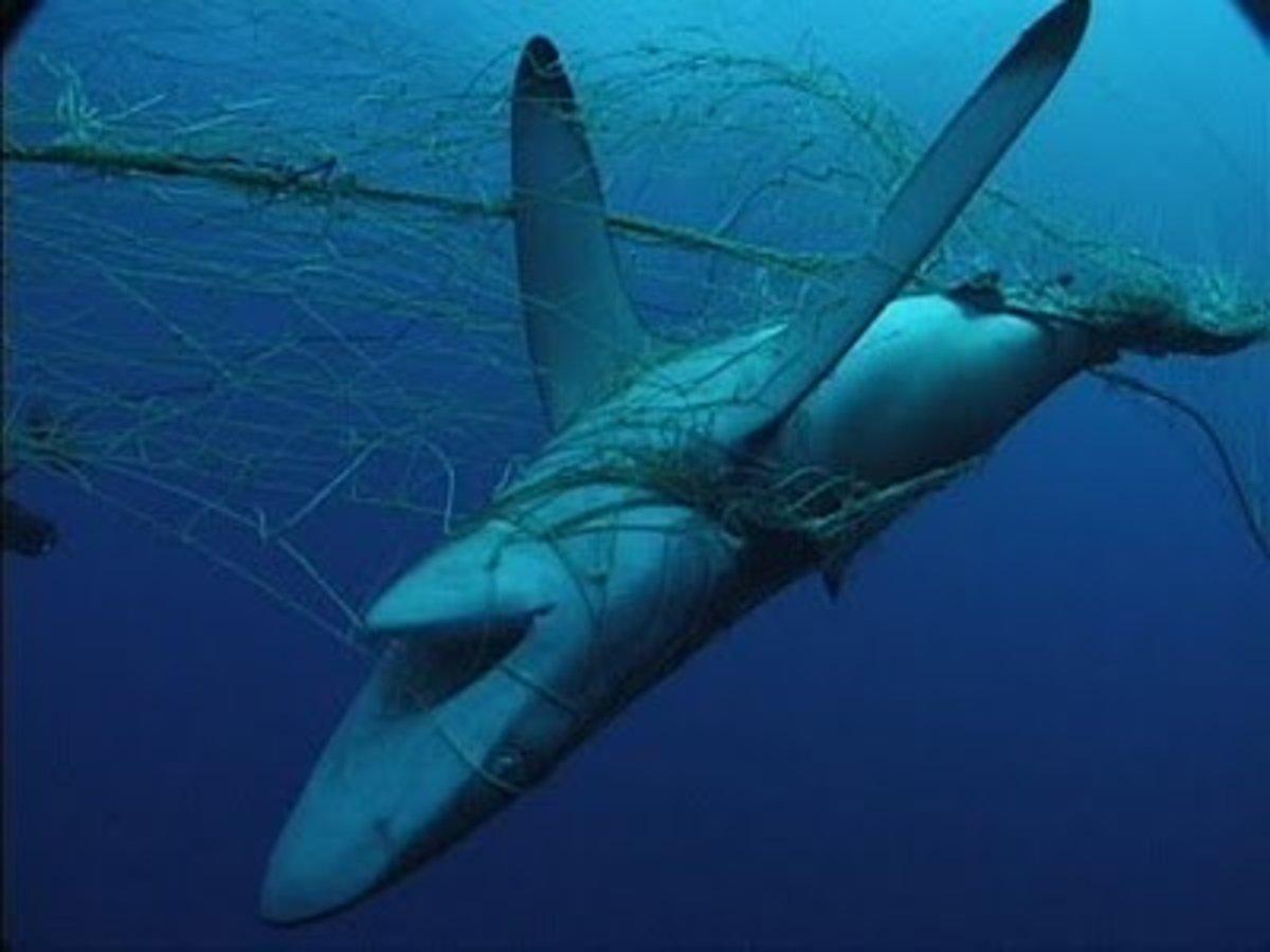Shark nets kill sea life.