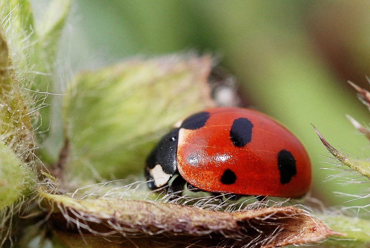 In some countries, a ladybird (or ladybug) is a symbol of good luck.