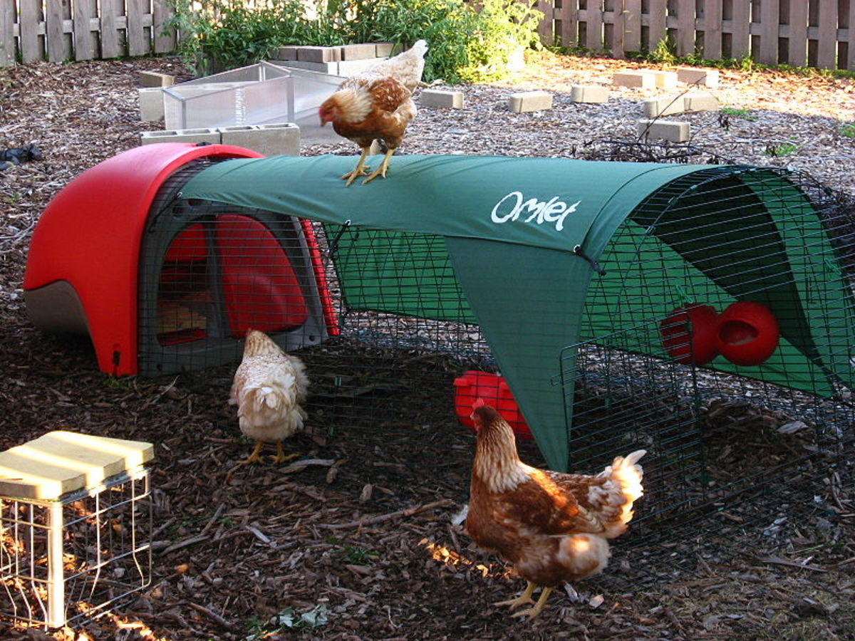 Fancy Chicken Tractor