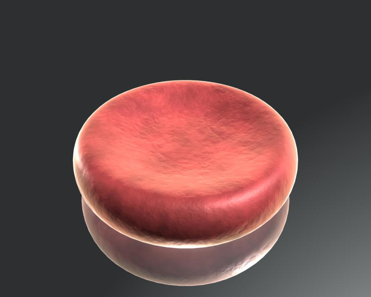 A Red Blood Cell