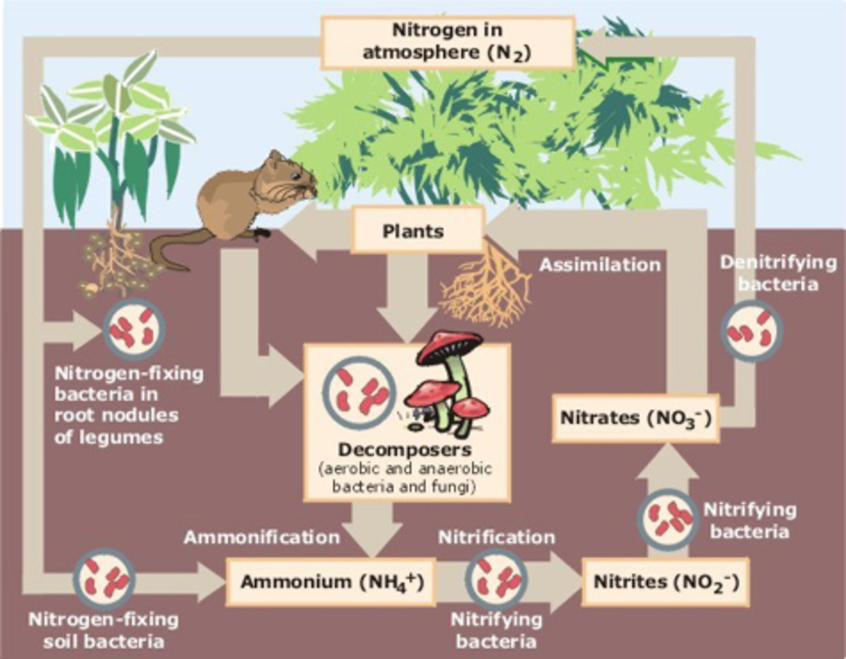 how-the-nitrogen-cycle-works