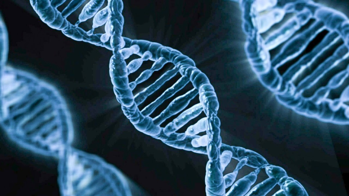 Ongoing research into the structure and function of DNA may help people suffering from a mitochondrial disease.