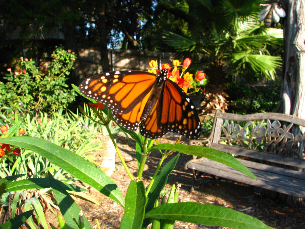 """How to"" essay topic idea: How to attract butterflies to your garden."