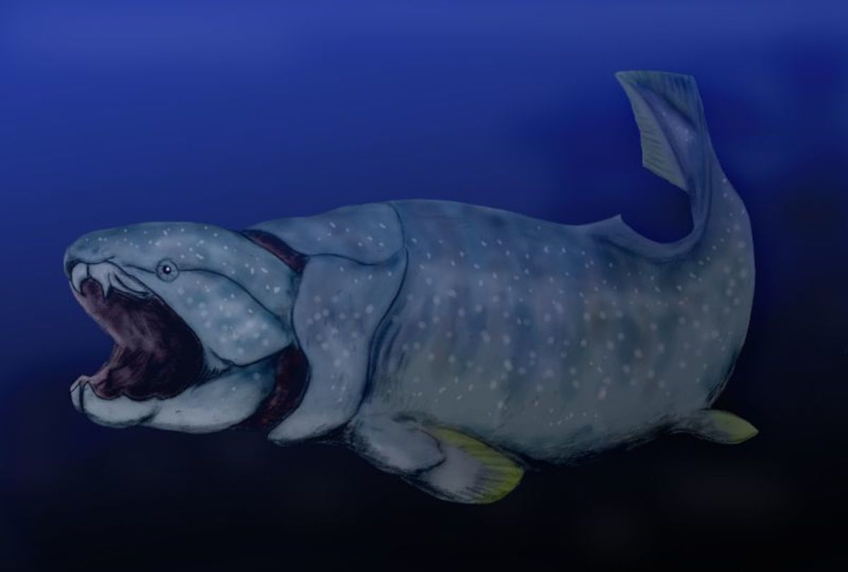 Dunkleosteus, a huge armoured fish was the top predator in the Devonian seas.