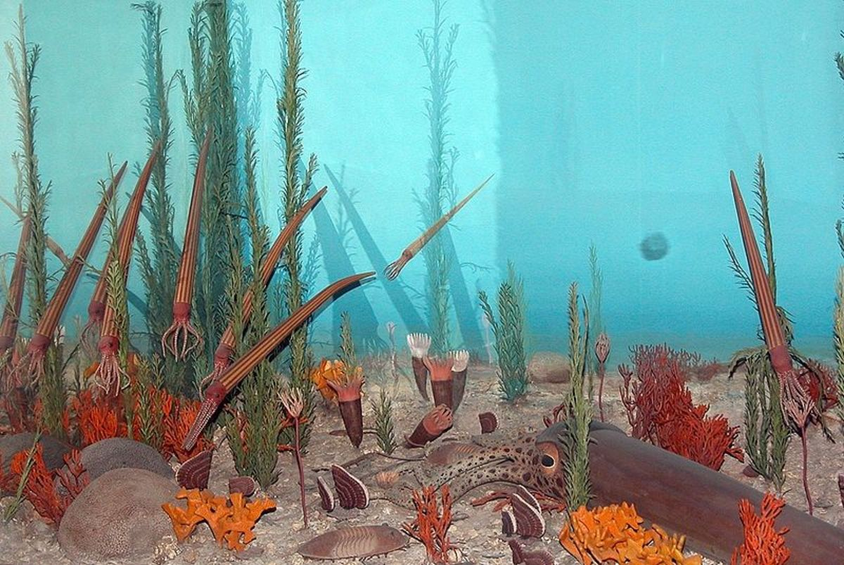 A reconstruction of life in the Ordovician seas which included trilobites and squid.