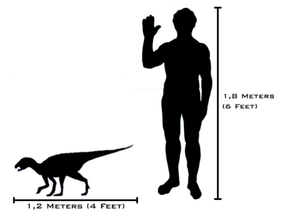 If the asteroid had missed, then it's likely that dogs would have never evolved. Instead the charismatic Heterodontosaurus may have become our best friend.