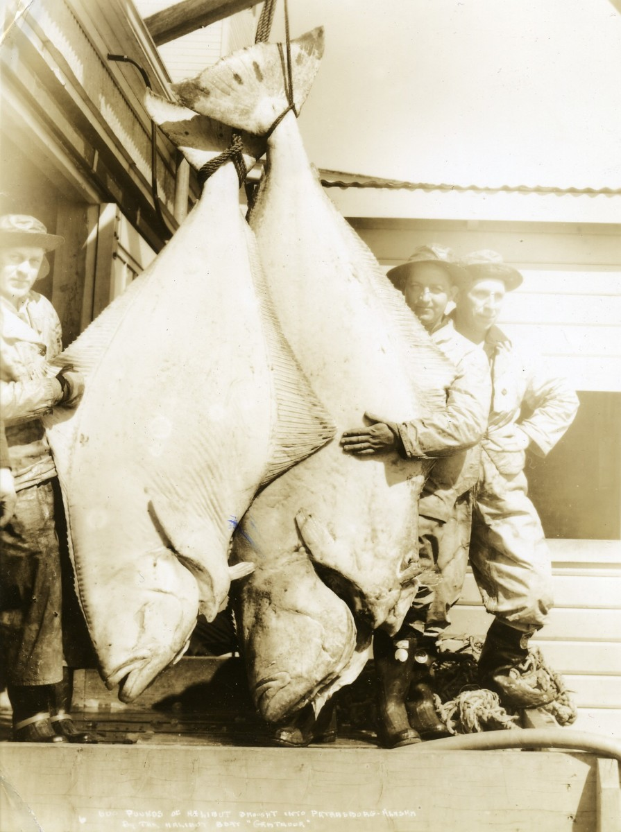 Two giant halibut caught near Petersburg, Alaska in the 1930s
