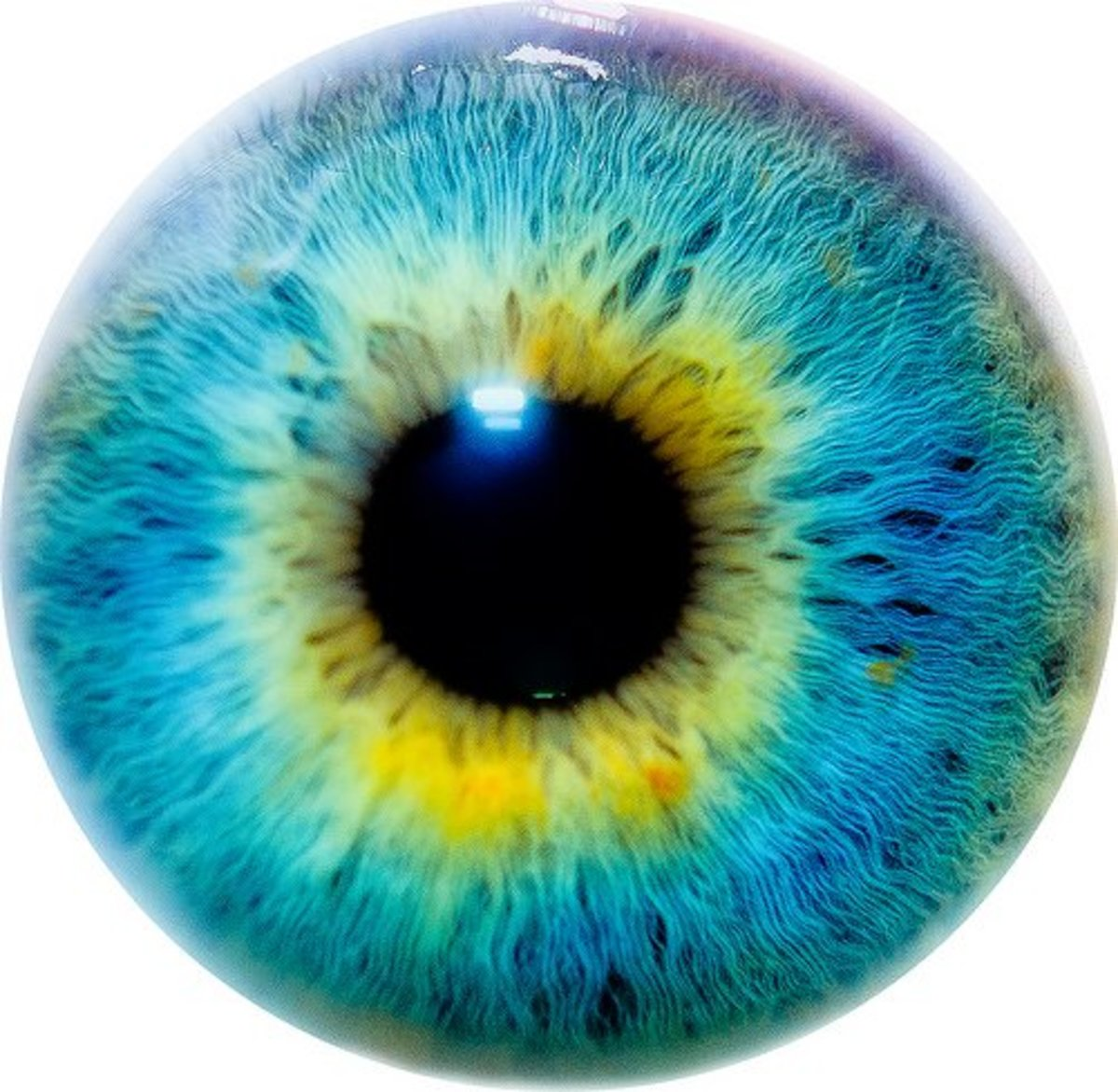 Does Eye Color Indicate Intelligence and Personality?  What Are Your Eyes Telling the World?