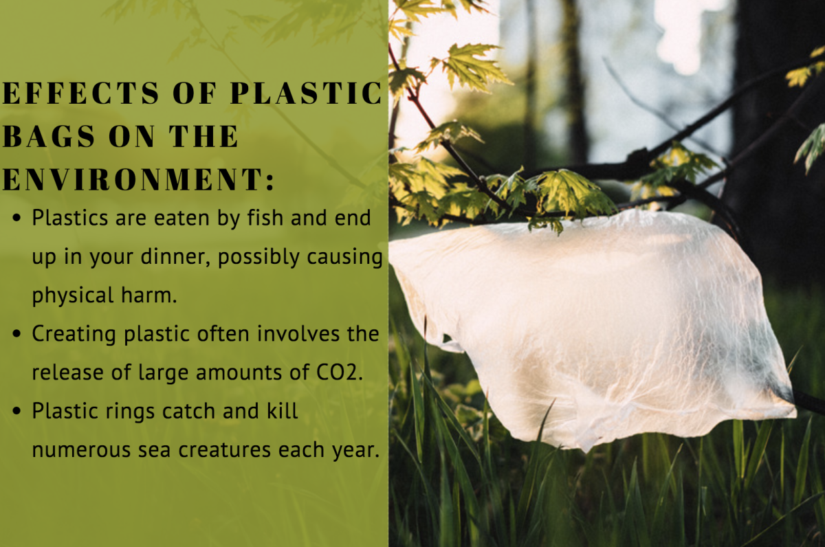 Many plastic shopping bags (like the one above) are manufactured from HDPE.