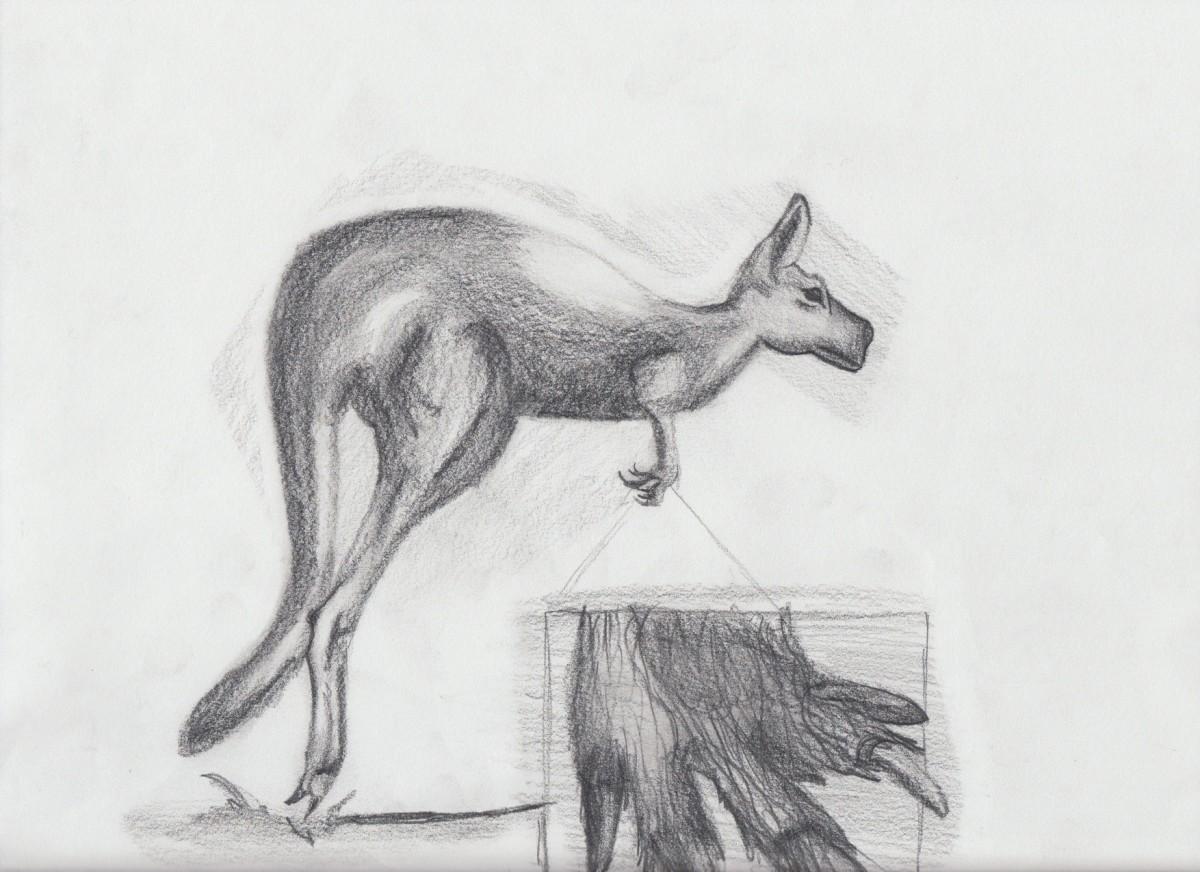 Kangaroo study