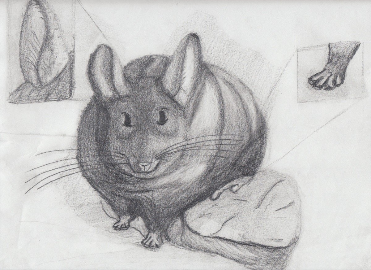Chinchilla study