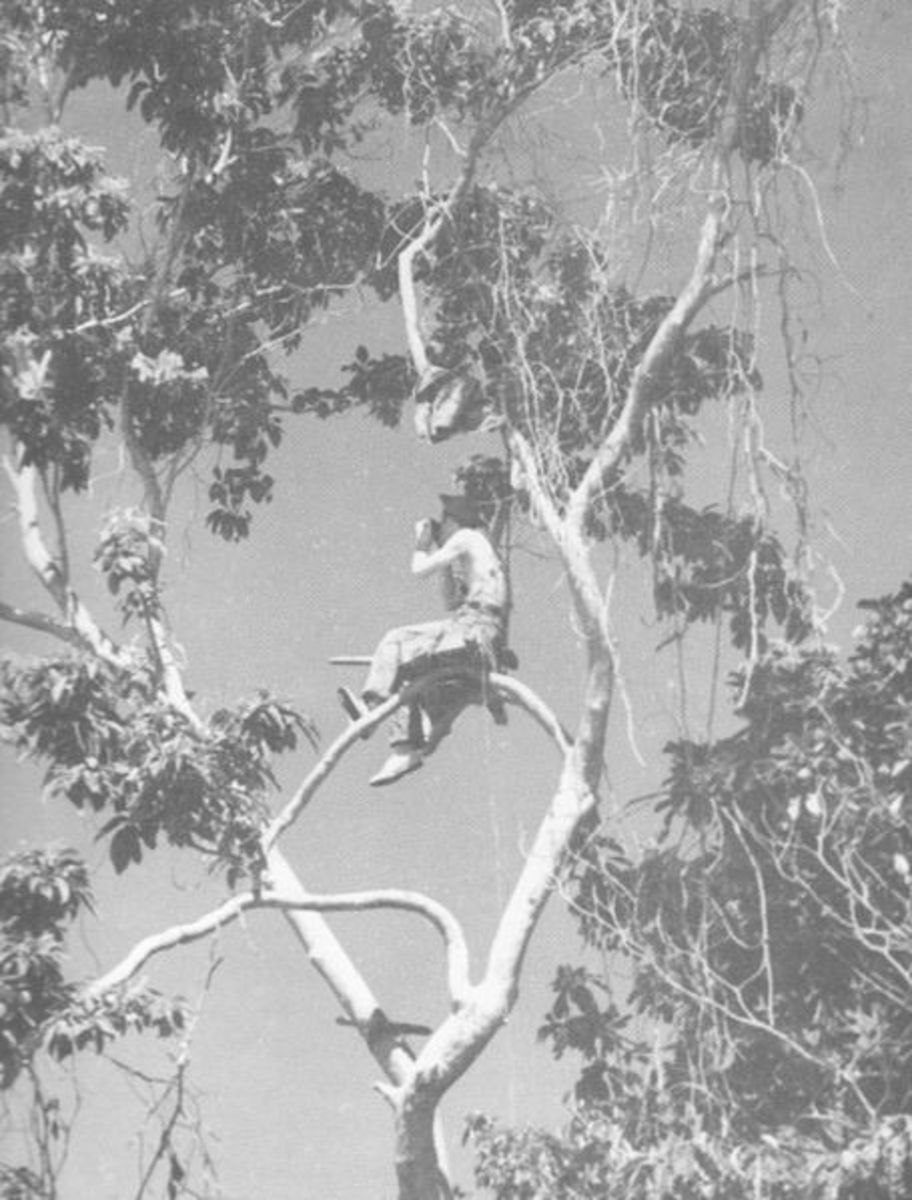 Marine Corps forward observer on Guadalcanal, 1942.  Finding a clear high point was rare. The jungle canopy created many problems. Some observers had to get as close as 50-100 yards to the Japanese.