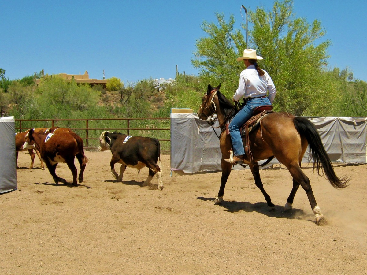 how-to-introduce-your-horse-to-cattle