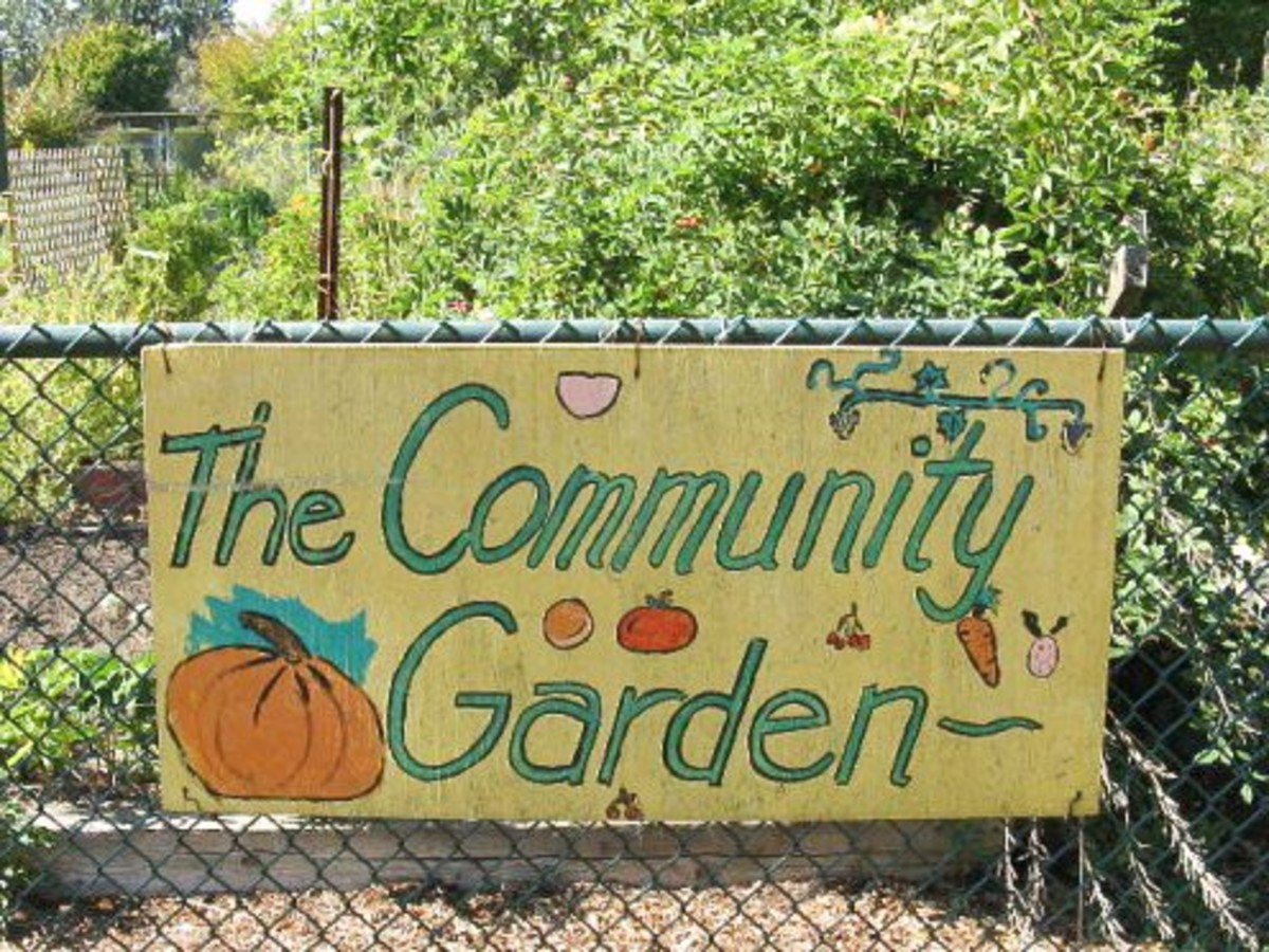 Growing produce in a garden is a useful strategy for teaching nutrition.