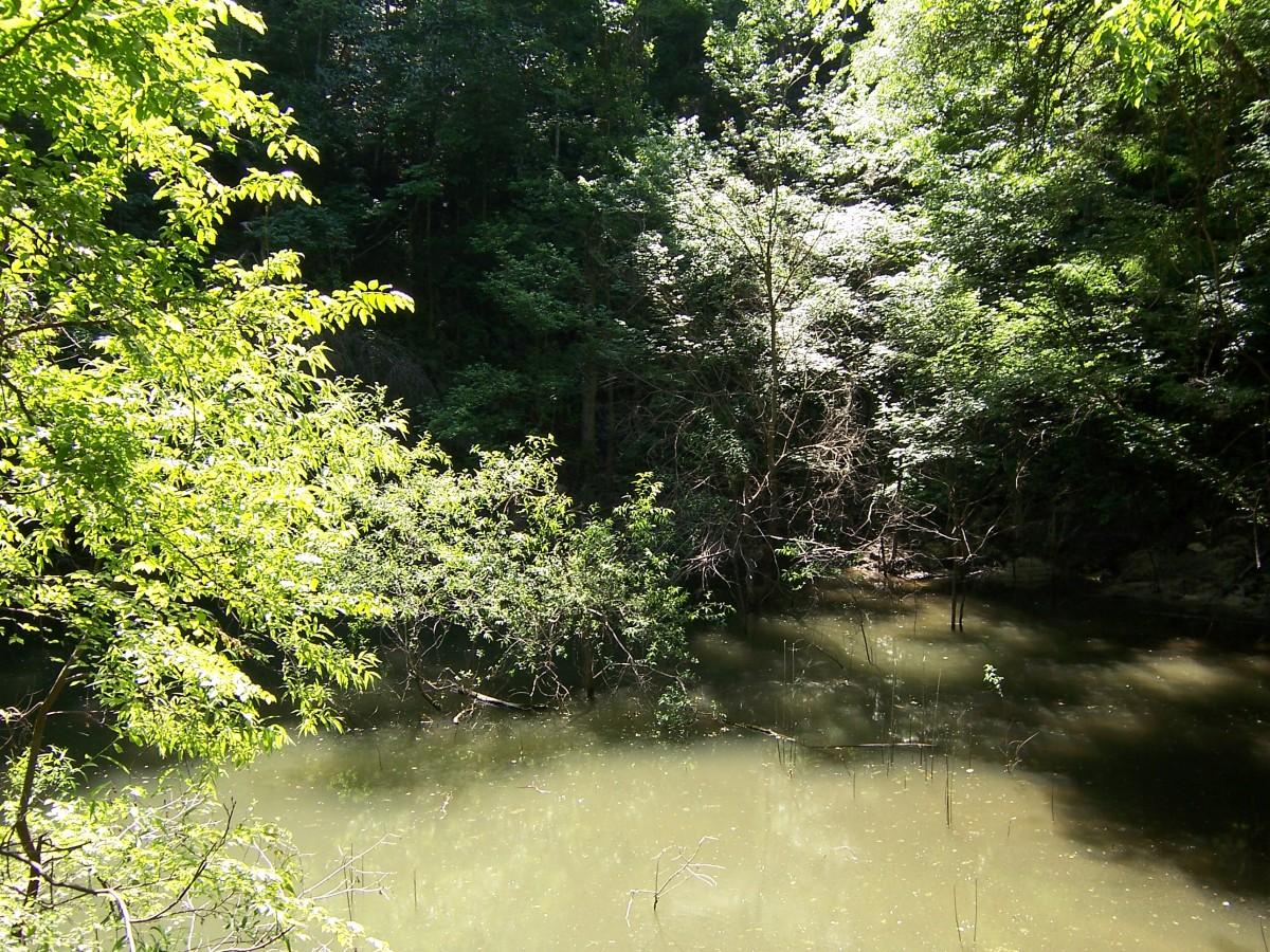 Famous sinkhole in Florida: Devi's Millhopper Geological Park