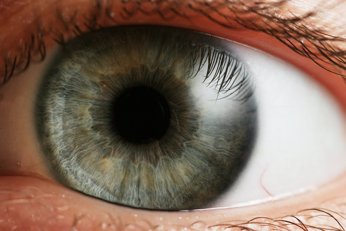 The Iris and Pupil.