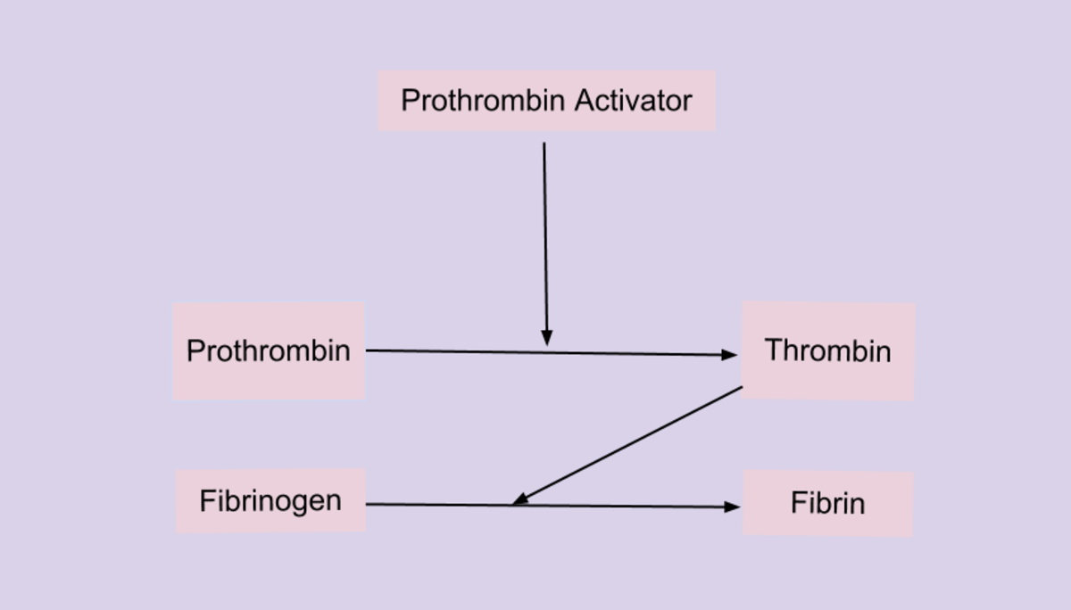 A prothrombin activator converts prothrombin into thrombin. Thrombin is an enzyme that converts fibrinogen into fibrin. Prothrombin and fibrinogen are proteins that are always present in our blood.