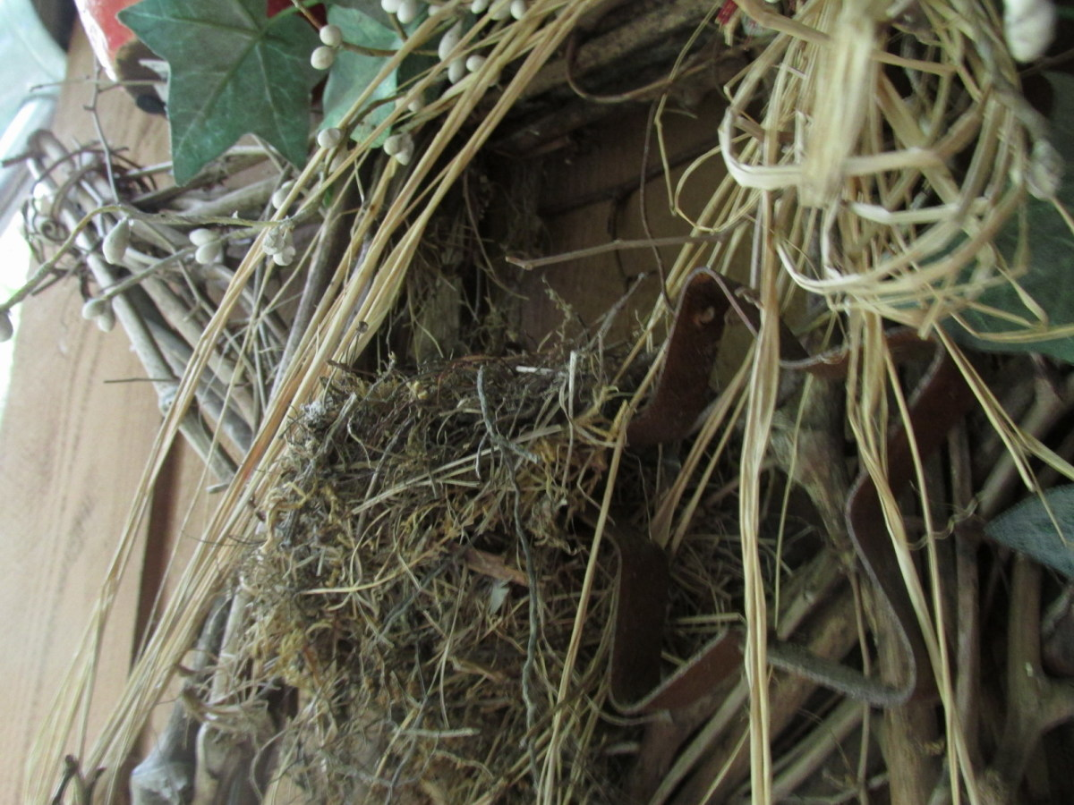 Junco nest in decoration by front door.