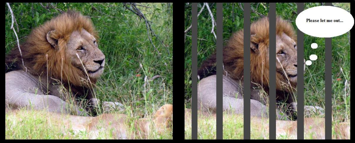 Taken at Kruger National Park. Cage bars complete the 'sad' illusion.