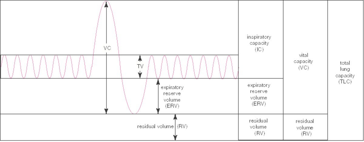 lung-volumes-and-capacities
