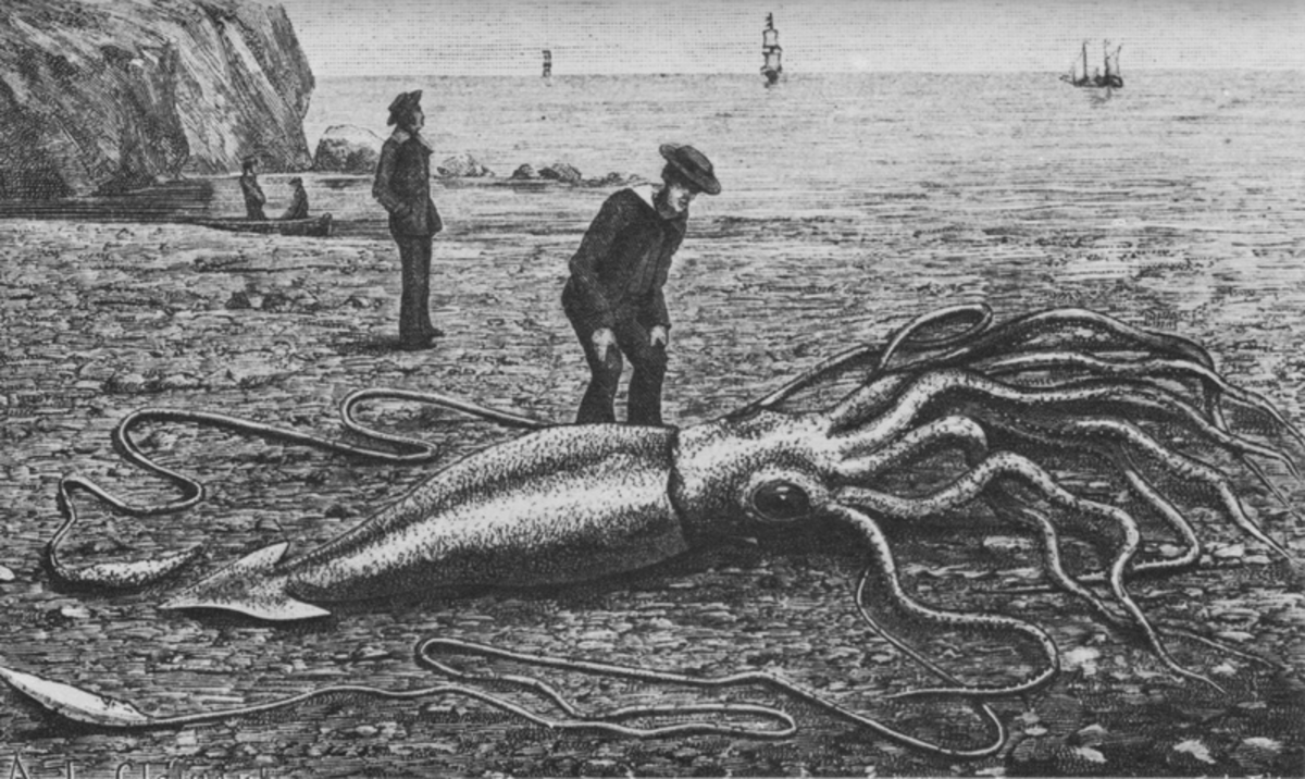 Giant Squid washed ashore.