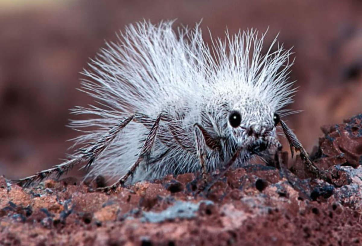 http://wordlesstech.com/2012/03/28/a-thistledown-velvet-ant/