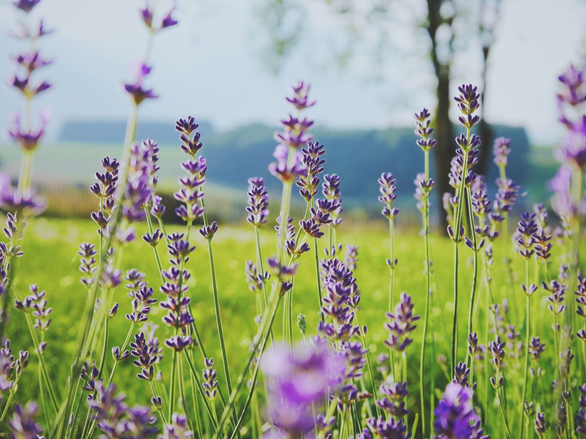 Is your field bursting with flowers or are there just a few?