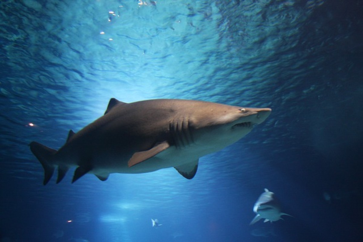 Shark attacks are rare but have resulted in fatalities in a number of cases.